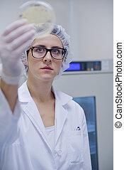 laboratório, trabalhando, cientistas