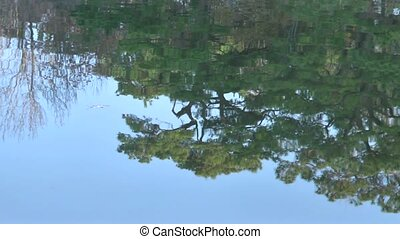 water reflection - Reflecetion of trees in river water.