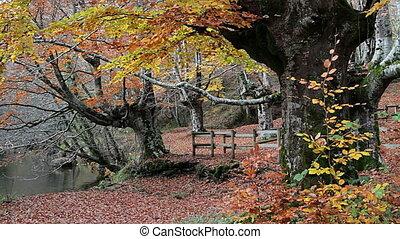 Autumn Q - Forest in autumn