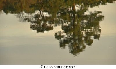 water reflection - Reflection of trees in river water.