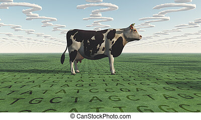 Cow and questions clouds GMO