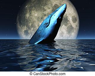 鯨魚, 海洋, 表面, 充分, 月亮