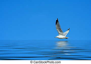 Seagull flying against a bright blue sky - A Seagull flying...