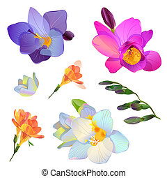 Vector freesia flowers and branches for your design - Vector...