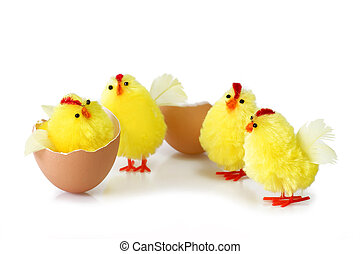 Friendship - Just hutched yellow chicken, eggs and eggshell...