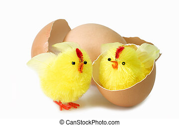 Friends forever - Just hutched yellow chicken, eggs and...