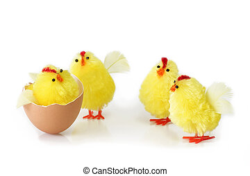 Stay together - Just hutched yellow chicken, eggs and...