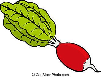 radish - hand drawn, vector illustration of a radish