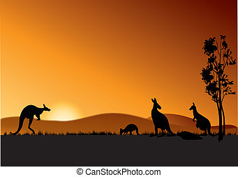 australia kangaroos - four kangaroos feeding in the bright...