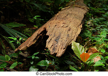 old wooden in the forest.