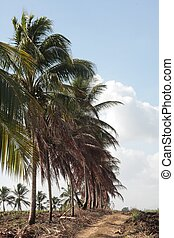 Guadeloupe - Palm trees in Guadeloupe