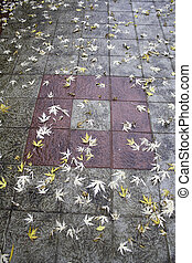 Autumn leaves on tiles - Autumn leaves on wet tiles, autumn...
