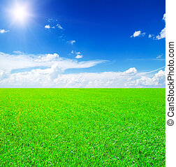 Field of grass and blue sky