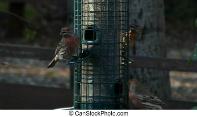 Songbirds perching on bird-feeder - Colorful songbirds fly...