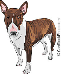 vector cartoon Bull Terrier Dog breed in black and tan -...