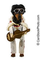 cantando, cão
