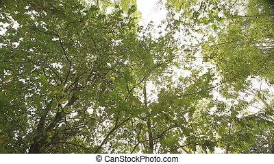 Tropical Asia  - Nature of tropical Asia : crane shot