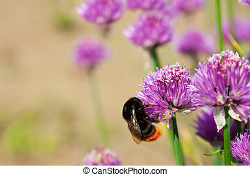 Flowers plant  with bee