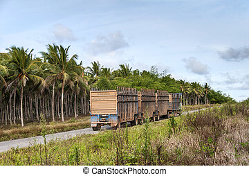 Truck for transport of sugarcane - Truck for the transport...