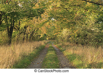 Trail in a flood plain, in the fall
