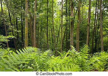aliso, bosque
