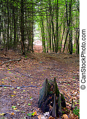 Footpath - A footpath in the mixed forest...