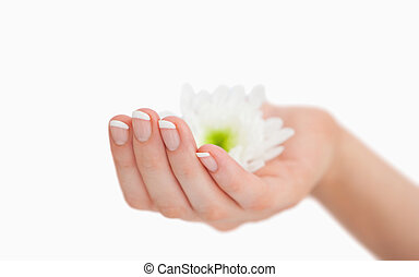 French manicured hand holding flowers