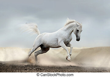 arab horse in desert