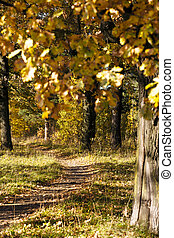 foot path - the road in the park, intended for walks of...