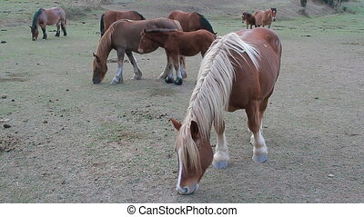 Horses six