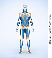 Joints of a blue digital skeleton body