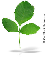 Abstract three green leaves with shadow isolated over white background