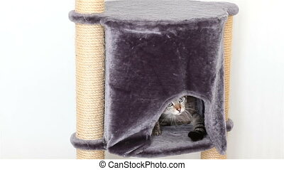 Funny Thai cat peeping out of his house.