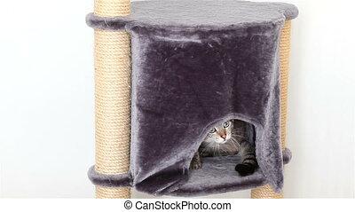 Funny Thai cat