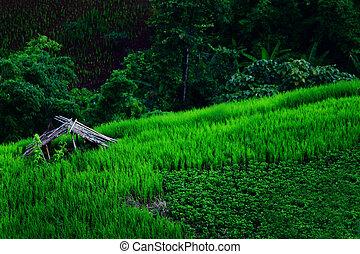 field landscape 1
