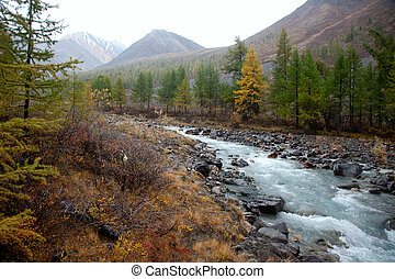 clear water in the rugged mountain river outdoors