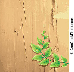 fresh green leaf on wood background