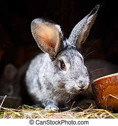 Cute rabbit popping out of a hutch European Rabbit -...