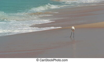 hunting heron on beach