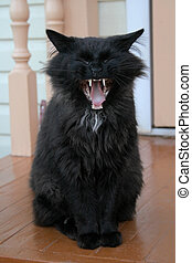 Pet-beast - Black cat is yawn on a porch. There are big...
