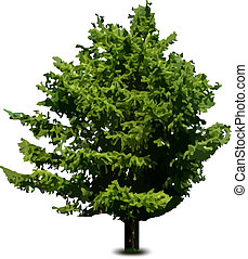Single pine fir tree isolated on white. Vector