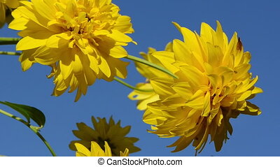 yellow flower blue sky