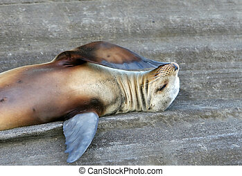Sea Lion, I Wonder - This Sea Lion is trying to figure out...