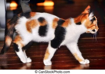Beautiful pretty calico cat kit - Beautiful pretty gorgeous...