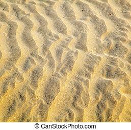 pattern of sand dunes at the beach