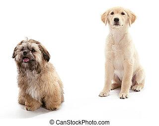 Alert Puppies