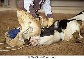 Cowboy lassoing cow - Close up of Cowboy lassoing cow