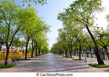 wayside trees - Beautiful summer wayside trees in Bangkok,...