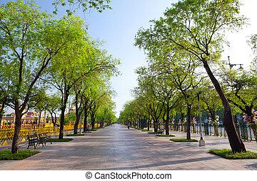 wayside trees - Beautiful summer wayside trees in Bangkok,...