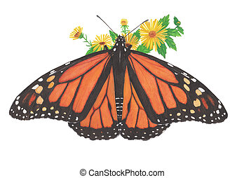 monarch - A Butterfly Painting with watercolor on paper
